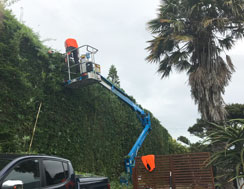 Hedge Trimming with lift