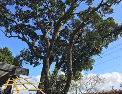 Tree Reductions and Trimming