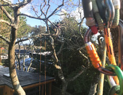Tree Trimming with equipment